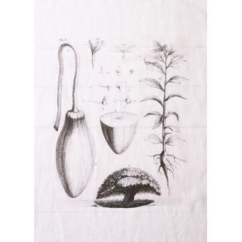 "Torchon ""Planche Plante"" blanc"